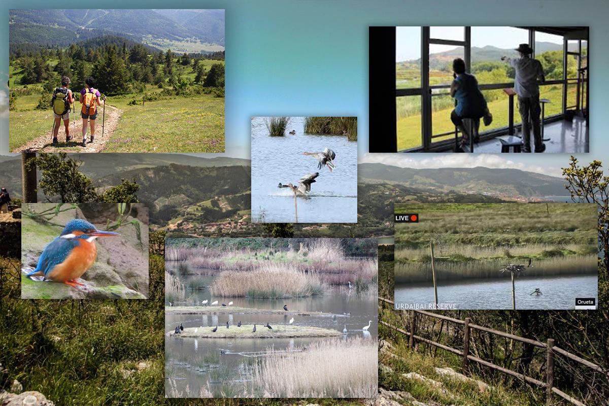 senderismo_birdwatching_urdaibai_baibike